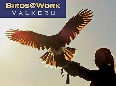 BIRDS@WORK ROOFVOGELSHOW, kerstmarkt Thorn, kerst, xmas, dagje uit, uitje met kerst,